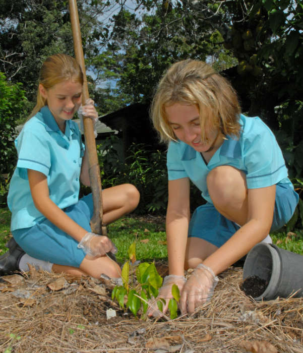 cairns eco tourism tree planting rainforestation