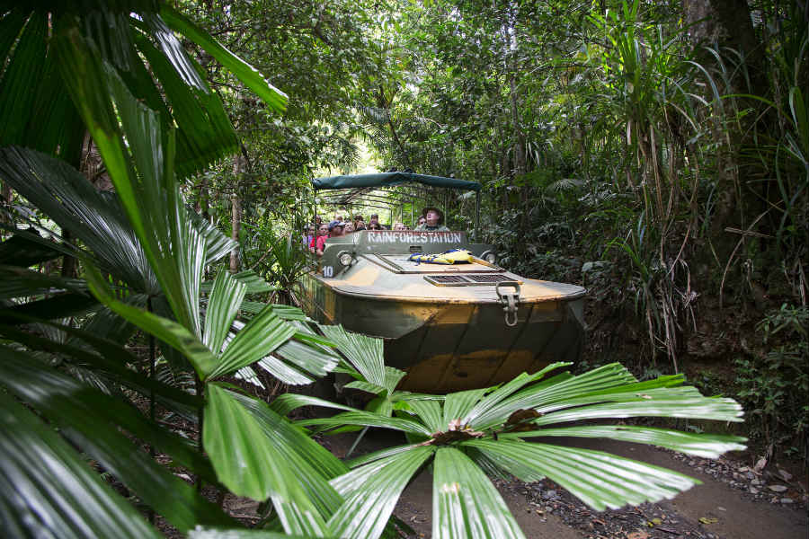 Rainforest Tours Cairns