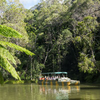 Rainforest Tours Cairns