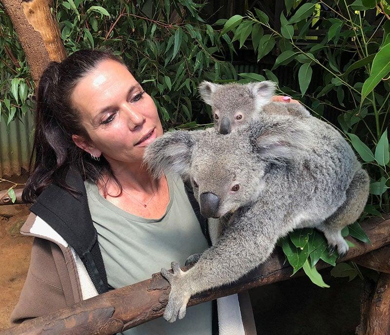 baby koala cairns koala joey rainforestation nature park kuranda
