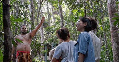pamagirri rainforest walkabout group activity