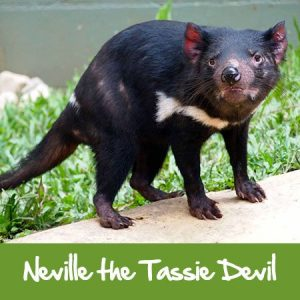 tasmanian devil rainforestation nature park