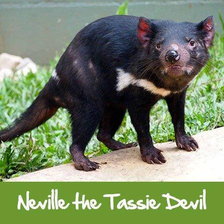 tasmanian devil rainforestation nature park