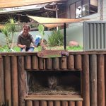 Volunteer Cleaning Wombat Enclosure Rainforestation Nature Park