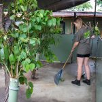 Volunteer Raking Koala Enclosure