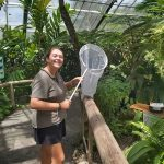 Volunteering At Australian Butterfly Sanctuary Kuranda