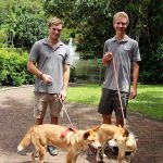 Volunteers Walking Dingoes Rainforestation